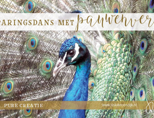De paringsdans met pauwenveren bij Personal Branding
